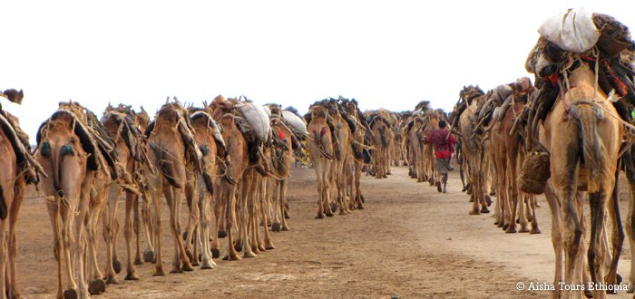 Danakil Depression and Afar people – Harar extension