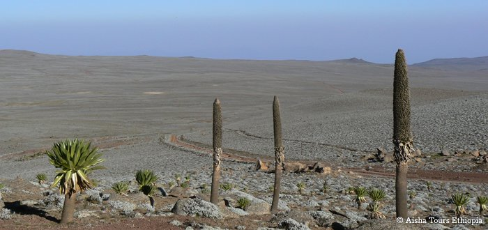 Special Trekking to the Semien and the Bale Mountains