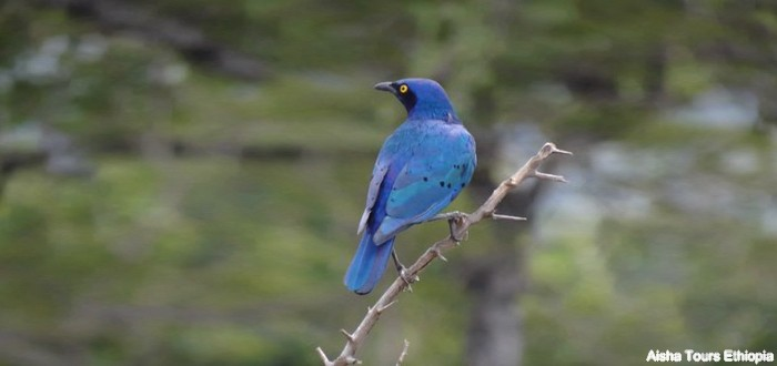 Ornithology in Ethiopia