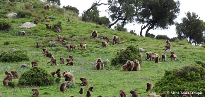 Trekking dans les montagnes du Semien et route historique en Ethiopie
