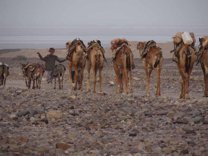 Dépression du Danakil et peuple Afar (extension Harar) en Ethiopie
